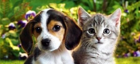 Prevenció a felelős állattartás érdekében