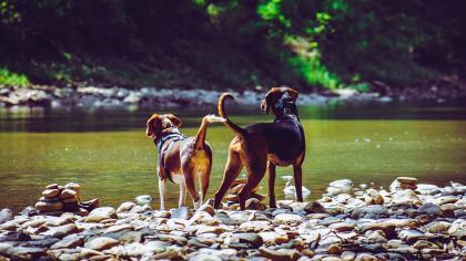 felelős kutyatartás